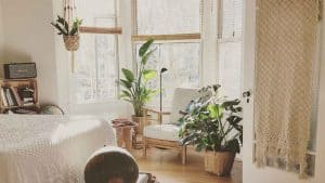 Plants for the removal of toxins in our home